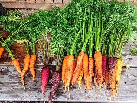 Gemüse, Gelberübe