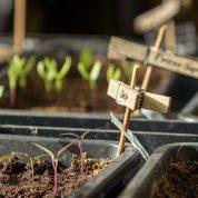 Bio- Saatgut und Bio- Pflanzen